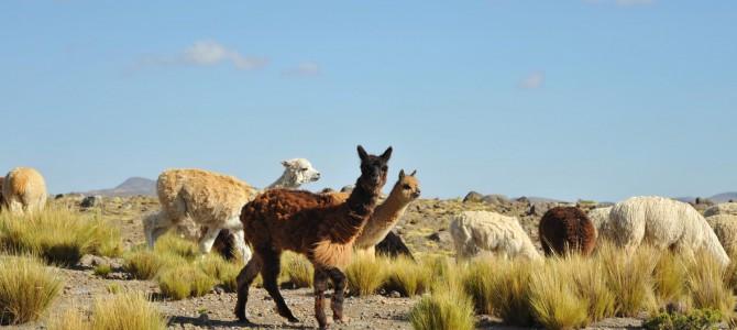 Verabschiedung auf peruanisch